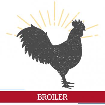 broiler icon, sunshine around chicken