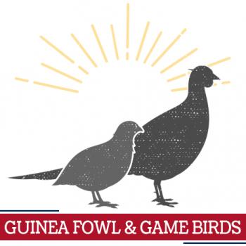 guinea fowl game birds icon, sunshine around guinea fowl game birds