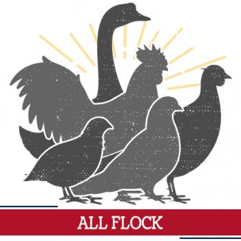 all flock icon, sunshine around multiple birds