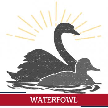 waterfowl icon, sunshine around waterfowl